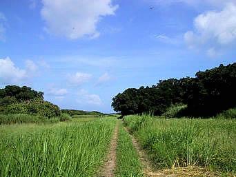 鳩間島の島の東西に抜ける道