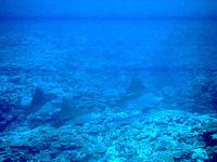 島仲浜リーフエッジの海の中
