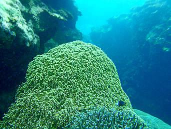 鳩間島の立原浜の沖のプール「リーフエッジの手前にある大きなホール」