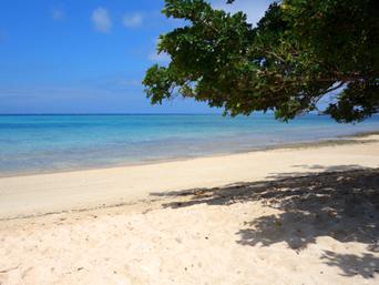 鳩間島の屋良浜「ビーチ入口にあるこの木陰が最高」