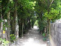 備瀬のフクギ並木/フク木並木