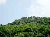 北部のカルスト山/円錐カルスト - 山頂を見ると石灰岩が露出しています
