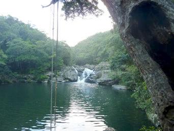 タナガーグムイの植物群落/安波の滝