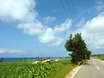 伊江島ののどかな伊江島の道「伊江島南側の道路がおすすめ」