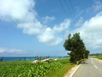 伊江島ののどかな伊江島の道