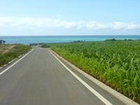 伊江島ののどかな伊江島の道 - 海側に下っていく道は特に最高