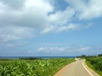 伊江島ののどかな伊江島の道 - 大きな木々が少なく景色が開ける
