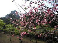 伊江島の城山登山道