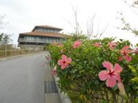 伊江島のハイビスカス園