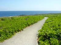 伊江島のリリーフィールド遊歩道 - 序盤は歩きやすいが・・・