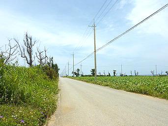 伊計島の伊計島の道