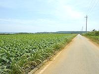 伊計島の伊計島の道 - 平行して走っている北側の道も良い感じ