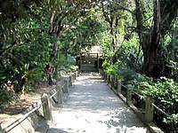 浜比嘉島のシルミチュー - この階段を上っていきます(写真は上から)