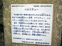 浜比嘉島のシルミチュー - 説明書きがありますので読んでから。