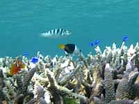 池間島の池間ブロックの海の中の写真