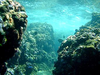 伊良部島の白鳥崎の海の中