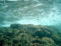 伊良部島の白鳥崎の海の中 - ドロップオフはなかり流れが複雑