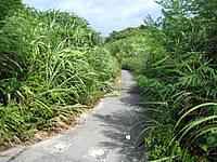 伊良部島のシンビジ/シンビシ - こんな細い道を下っていきます
