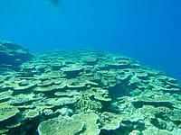 サバ沖 岩場側の海の中