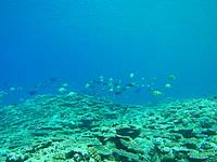 伊良部島のサバ沖 岩場側の海の中 - 魚はそれほど多くない