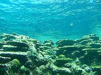 伊良部島のサバ沖 岩場側の海の中 - 魚よりもサンゴを楽しむ海かも?