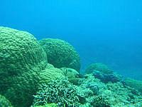 下地島の中の島の海中 - 水深が深い部分もあるので注意!