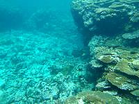 伊良部島のシンビシリーフエッジ - プール部分は面白い