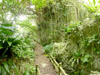 伊良部島の牧山公園/豊見氏親墓碑 - 下の公園部分の荒れた散策路
