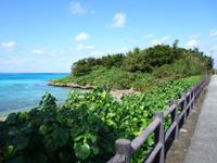 伊良部島の佐和田漁港の海 - 道路の脇ですが車からだと見えない