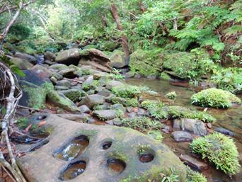 西表島のゲーダの滝への道「もののけの森のようないい雰囲気」
