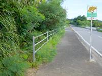 西表島のゲーダの滝への道 - C−6のヤマネコ看板前が入口