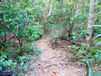 西表島のゲーダの滝への道 - 序盤は森の中