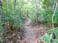 西表島のゲーダの滝への道 - 対岸に渡った後も森の中