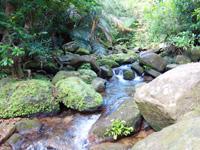西表島のゲーダの滝への道 - 森を抜けると川沿いや川の中を歩きます