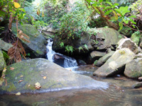 西表島のゲーダの滝への道 - この大岩を超えれば滝近し