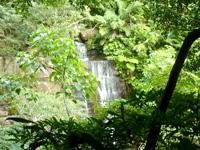 西表島のゲーダの滝上への道