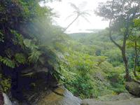 西表島のゲーダの滝上