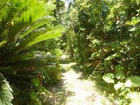 西表島のみみきりの浜/宇那利崎のビーチ - 木々のトンネルを抜けた先にビーチがあります
