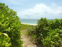 西表島のみみきりの浜/宇那利崎のビーチ - ビーチまであと少しのところ