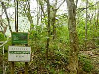 西表島のヤエヤマヤシ展望所
