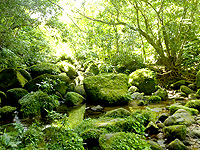 西表島のユツン川/ユチン川