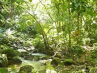 西表島のユツン川/ユチン川 - とにかく絵になる川だと思います