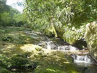 西表島のユツン川/ユチン川 - 岩の脇には小さなせせらぎ