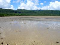 西表島の船浦湾の干潟 - 干潮時は広大な干潟に!