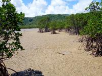 西表島の船浦湾の干潟 - マングローブと干潟