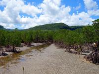 西表島のピナイサーラの滝への道 - ブイが目印
