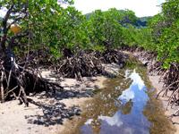 西表島のピナイサーラの滝への道 - 序盤はこの水路を遡上します