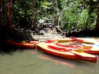 西表島のピナイサーラの滝への道 - 船着き場が中間地点