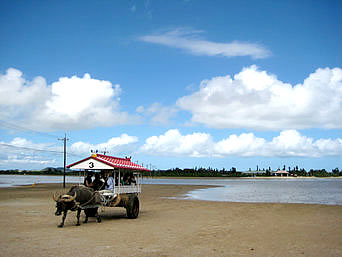 西表島の由布島「まさに水牛車に乗って島を往来する感じ」