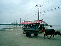 西表島の由布島 - 水牛に乗らなくても渡れますが・・・